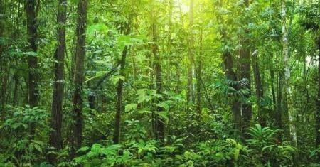 Pozemok s vlastným hustým lesom (na cca 2/3 plochy) 3216 m2, všetky IS, Slanské Nové Mesto, 30 km z m. Košice
